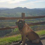 dog enjoying mountain view
