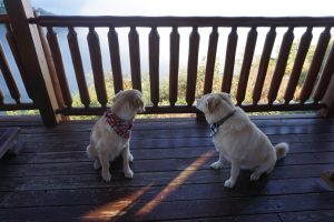 Dogs looking at mountain views